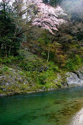 20100410kawa1.JPG